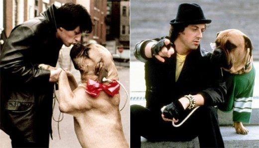 シルベスター-スタローン-愛犬-バッカス