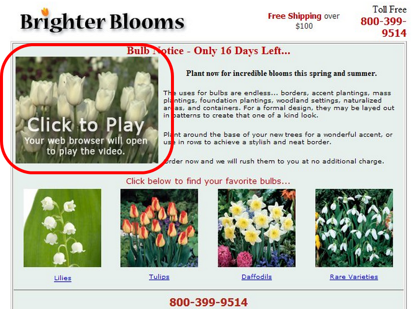 38-17_Brighter-Bloomsの事例2